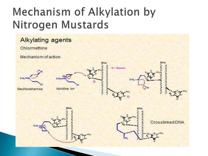 mechanism of alkylation bynitrogen mustards