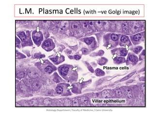 All 1st Midterm slides - Prac. Histology