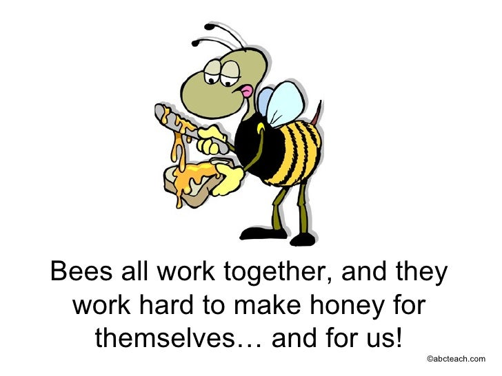 All About Bees Slideshow