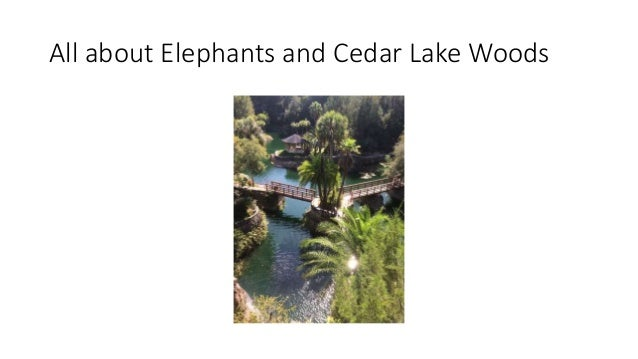 All about Elephants and Cedar Lake Woods