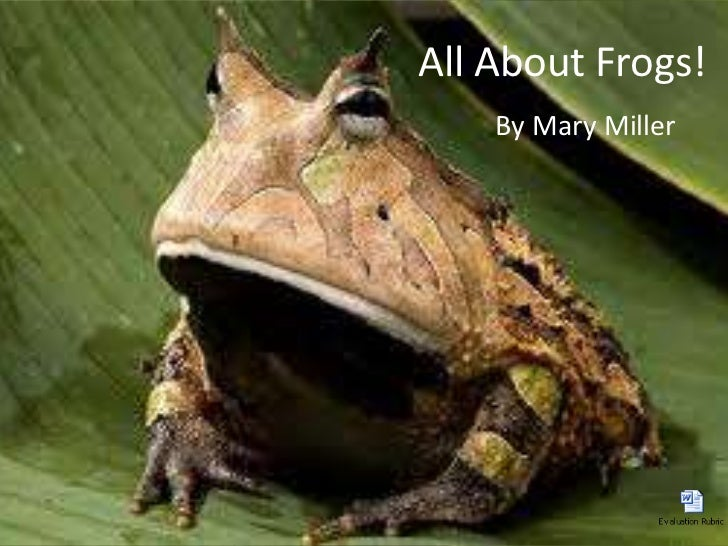 All About Frogs!<br />By Mary Miller<br />
