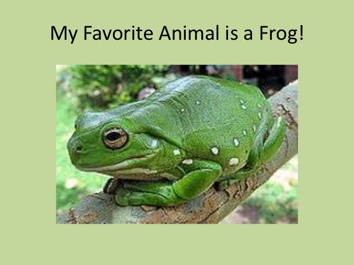 My Favorite Animal Is A Frog!