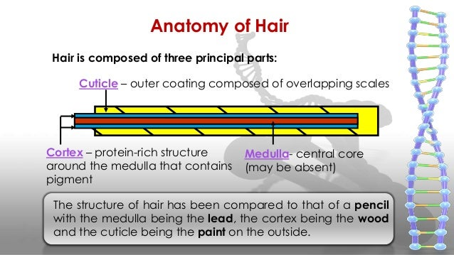 All about hair ppt