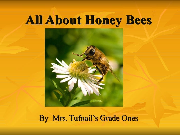 All About Honey   Bees By  Mrs. Tufnail's Grade Ones