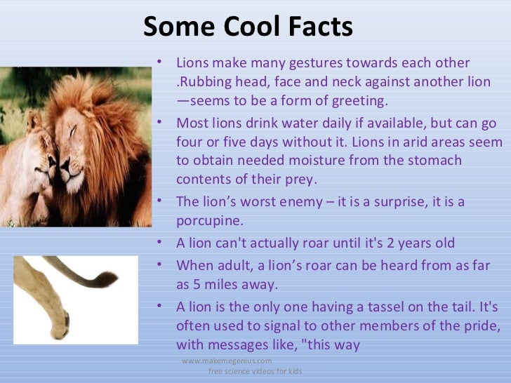 All about lions 30 fun ,interesting facts for kids ppt.