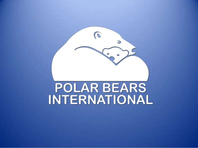The polar bear is the youngest of the eight bear species. Scientists believe that the polar bear evolved about 200,000 yea...