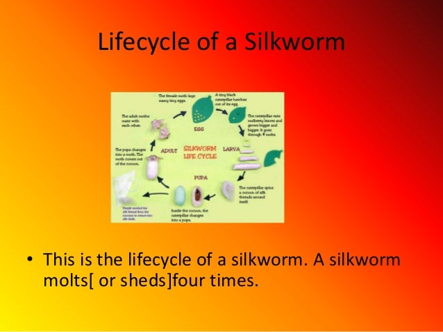 Silkworm Facts For Kids