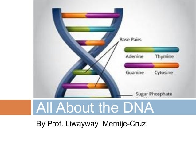By Prof. Liwayway Memije-Cruz All About the DNA
