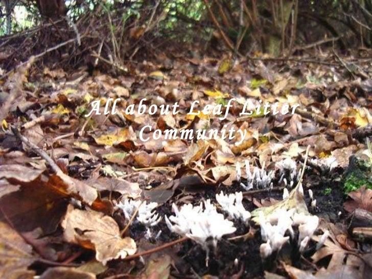 A l l about Leaf Litter Community