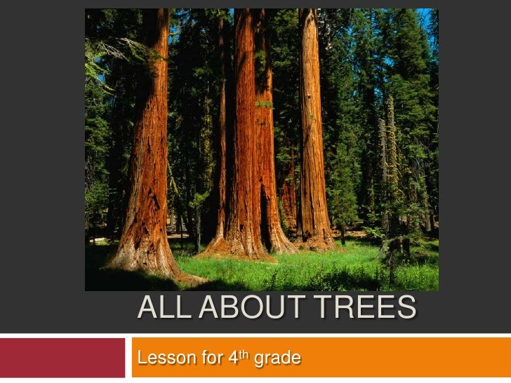 All About trees<br />Lesson for 4th grade <br />
