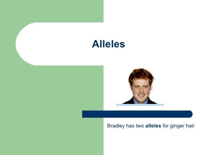Alleles Bradley has two  alleles  for ginger hair