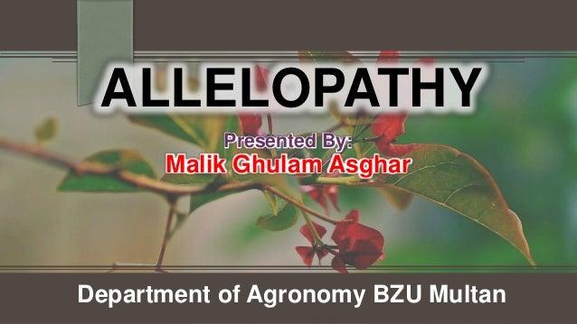 ALLELOPATHY Department of Agronomy BZU Multan Presented By: Malik Ghulam Asghar