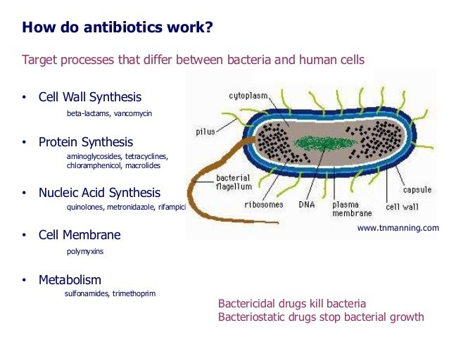 a look at the effects of antibiotics on bacterial growth The effects of disinfectants and antibacterial soap on bacterial growth abstract the effects of various the effect of antibiotics on the growth of.