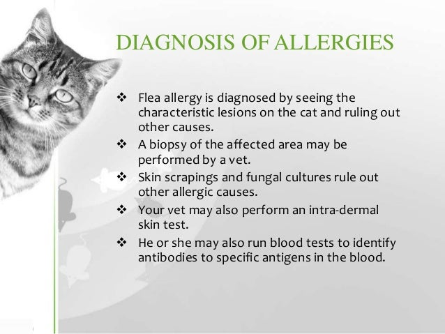 Food Allergies In Cats Causes