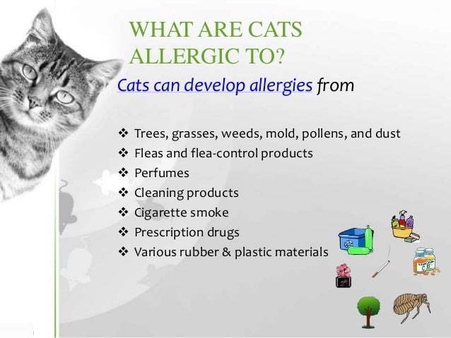 Cats Allergy Symptoms To Food