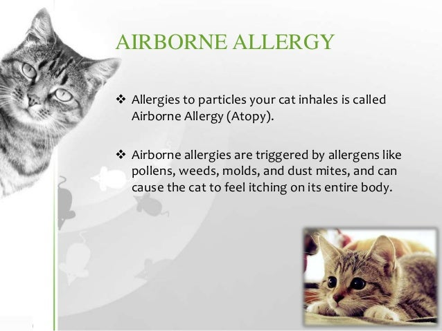 Cat Allergies Symptoms Diagnosis Treatment Amp Prevention