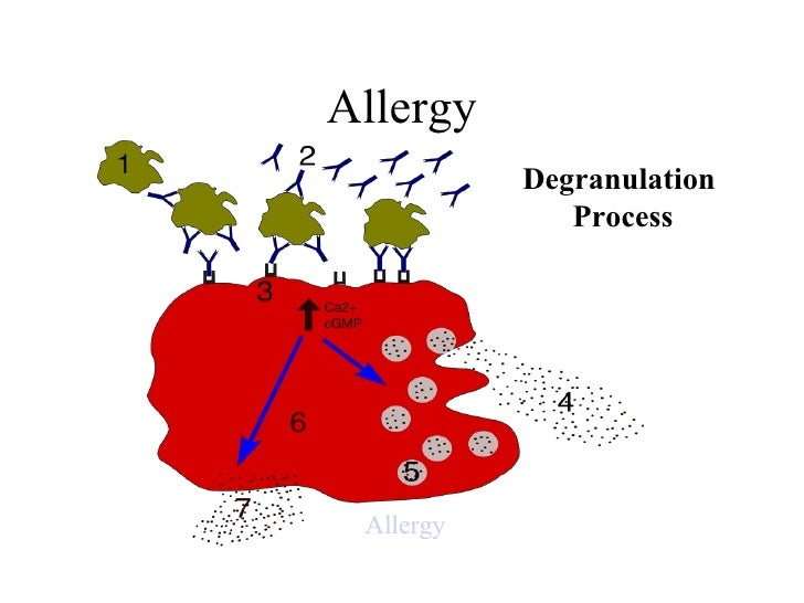 Allergy Degranulation  Process