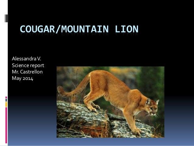 COUGAR/MOUNTAIN LION AlessandraV. Science report Mr. Castrellon May 2014