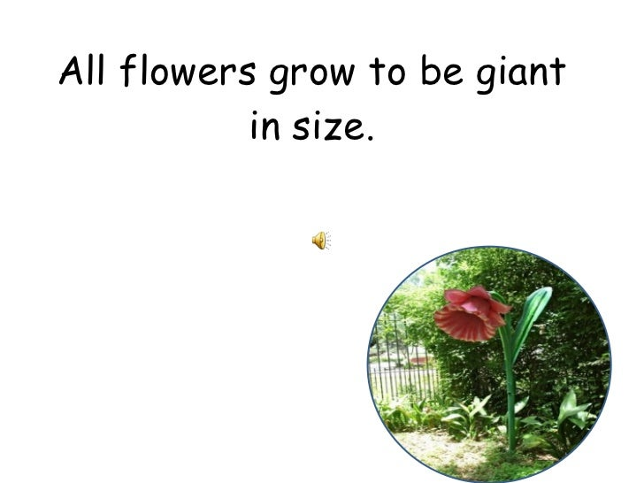 All flowers grow to be giant in size.
