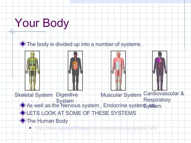 Your Body The body is divided up into a number of systems.  Skeletal System Digestive Muscular System Cardiovascular & Res...