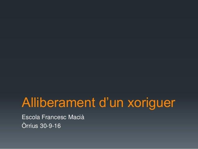 Alliberament d'un xoriguer Escola Francesc Macià Òrrius 30-9-16