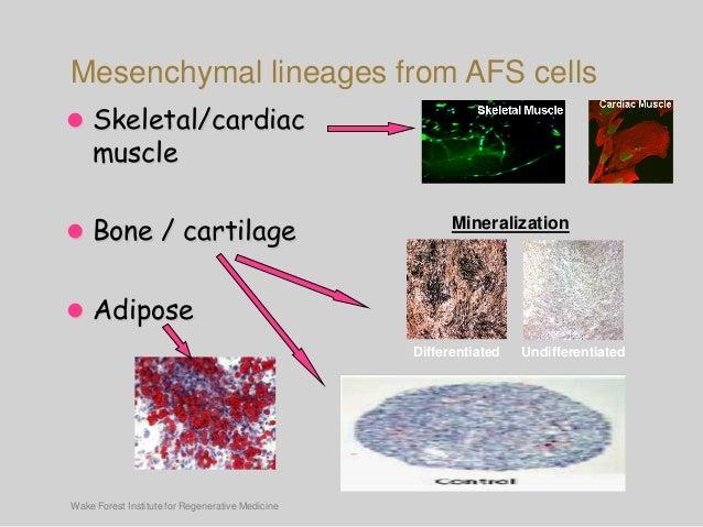 Deriving Mesenchymal Stem Cells From Human Amniotic Fluid