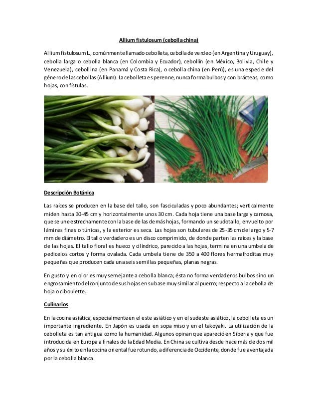 Allium fistulosum (cebolla china)  Allium fistulosum L., comúnmente llamado cebolleta, cebolla de verdeo (en Argentina y U...