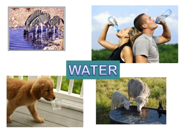 uses of water in living things Michigan environmental education curriculum web modules in water  living in the united states use groundwater for  uses you can see why groundwater must.