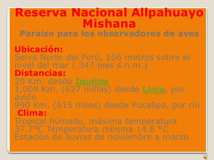 Reserva Nacional Allpahuayo MishanaParaíso para los observadores de aves<br />Ubicación:Selva Norte del Perú, 106 metros s...