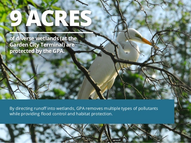 9 ACRES of diverse wetlands (at the Garden City Terminal) are protected by the GPA.  By directing runoff into wetlands, GP...