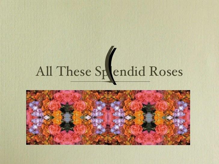 All These Splendid Roses (