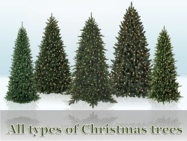 Type Of Christmas Trees.All Types Of Christmas Trees