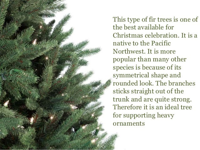 douglas fir 5 - What Kind Of Trees Are Christmas Trees