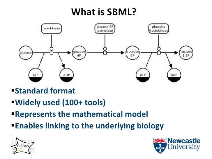 What is SBML?<br /><ul><li>Standard format