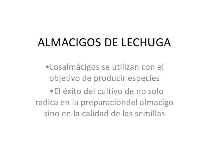 ALMACIGOS DE LECHUGA<br />•Losalmácigos se utilizan con el objetivo de producir especies<br />  •El éxito del cultivo de n...
