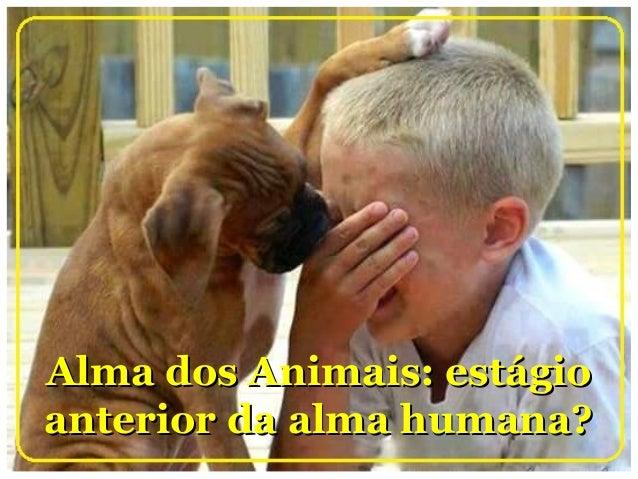 Alma dosAlma dos AnimaisAnimais:: estágioestágio anterioranterior dada alma humanaalma humana??
