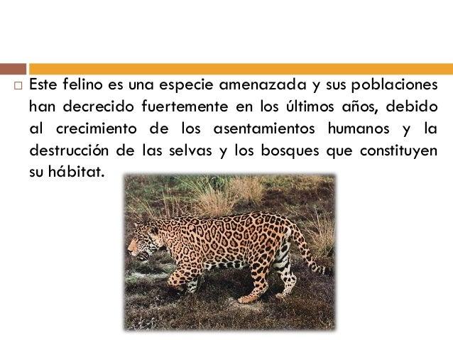 Los animales de mexico en peligro de extincion