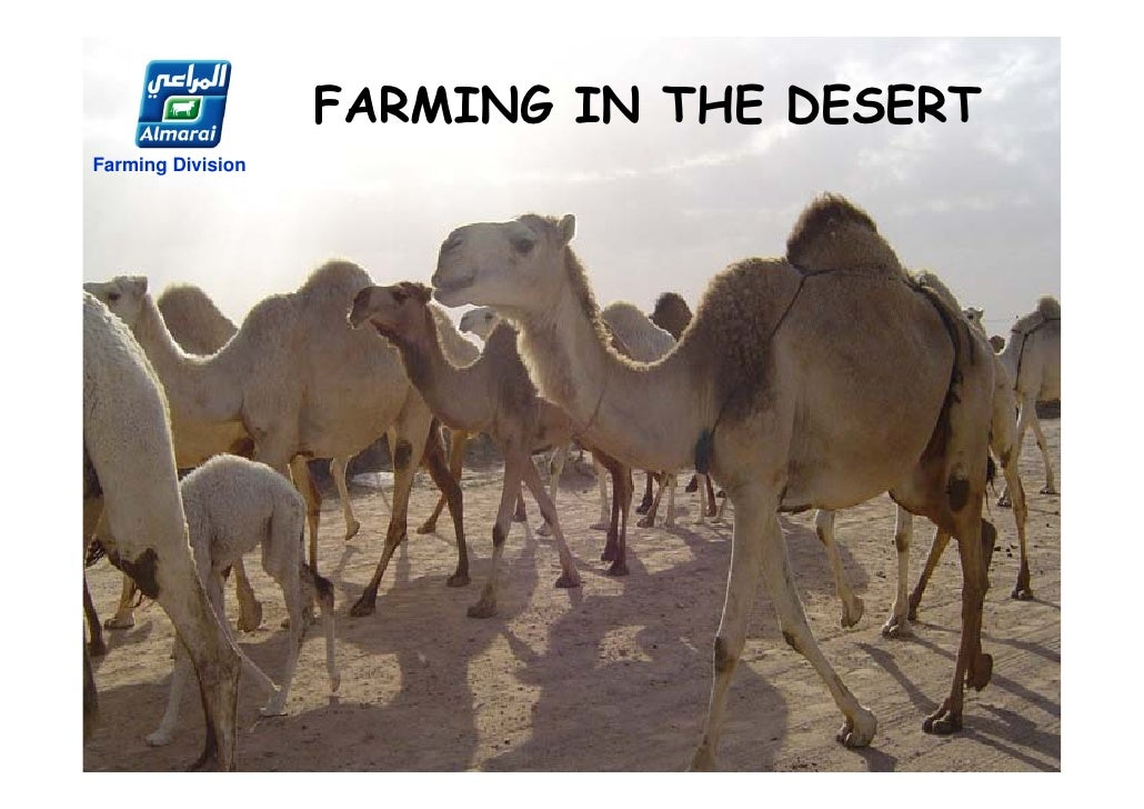 FARMING IN THE DESERTFarming Division