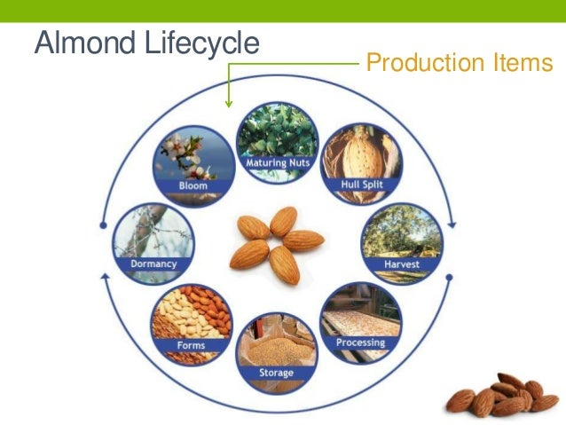 Almond Presentation Pptx