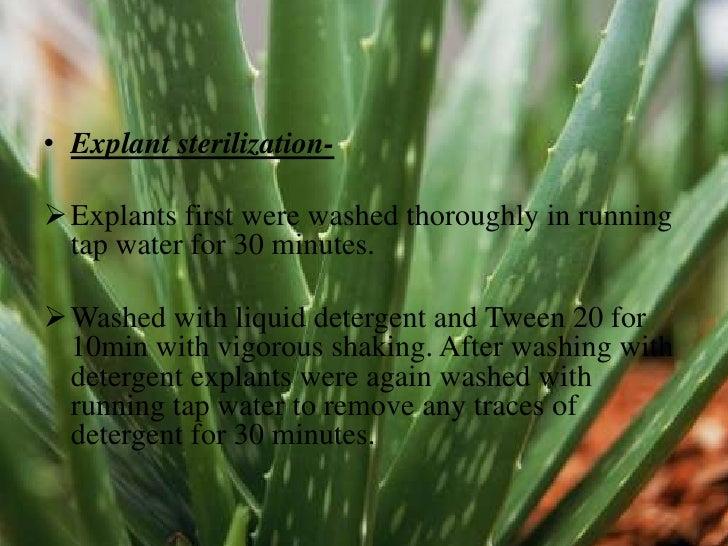 Plant Tissue Culture Of Aloe Vera