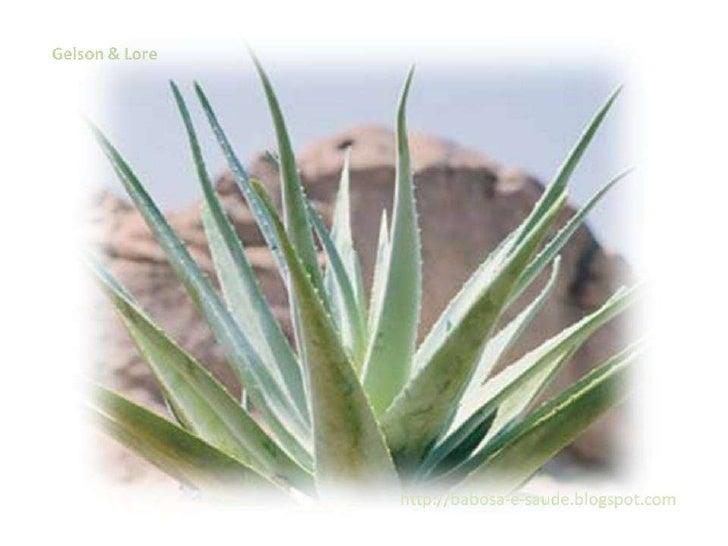 Aloe Vera A Imperatriz Das Plantas Medicinais
