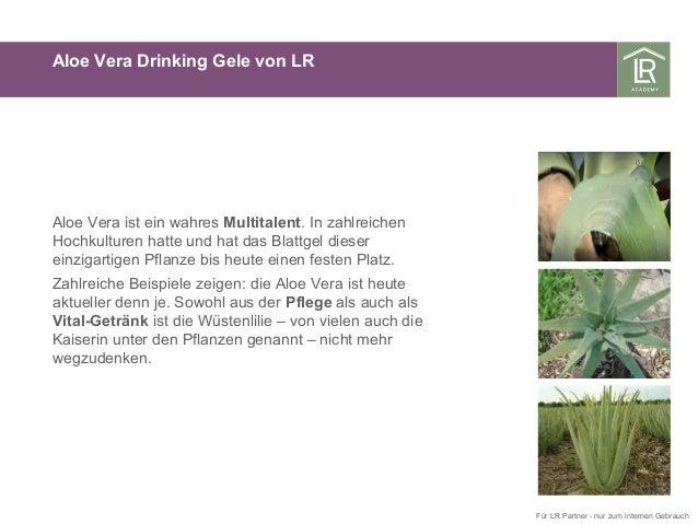 Aloe Vera Drinking Gele von LR Aloe Vera ist ein wahres Multitalent. In zahlreichen Hochkulturen hatte und hat das Blattge...