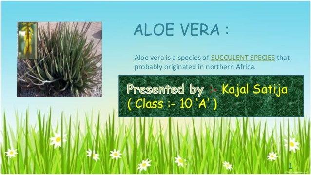 ALOE VERA : Aloe vera is a species of SUCCULENT SPECIES that probably originated in northern Africa.                 :- Ka...