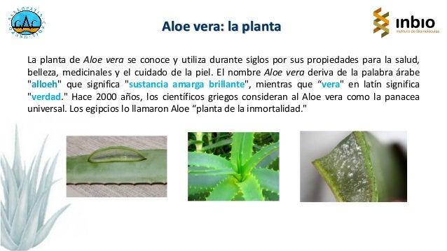 Aloe vera en la alimentación. Francisco Antonio Macías. IV Jornada Técncia. Cártama Slide 2