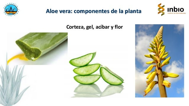Aloe vera en la alimentación. Francisco Antonio Macías. IV Jornada Técncia. Cártama Slide 3