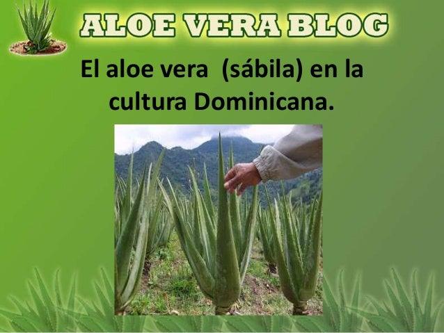 El aloe vera (sábila) en la   cultura Dominicana.