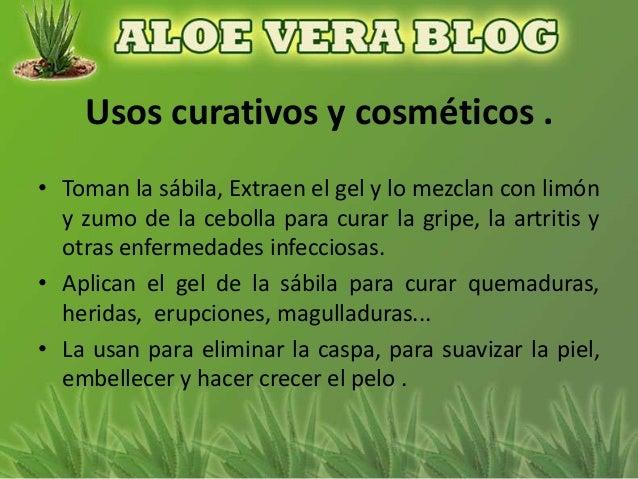 Aloe vera en la cultura dominicana 1 - Alcohol de limpieza para que sirve ...