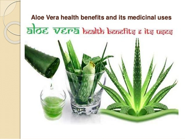 art aloe vera and its health To keep a fresh supply of aloe vera in your home, consider buying a few aloe vera plants since they are native to the desert, even the blackest of thumbs can keep an aloe vera plant alive this way you have it on hand for any sunburns, wounds, or skin irritations, and can harvest it fresh on a daily basis for internal use as well.