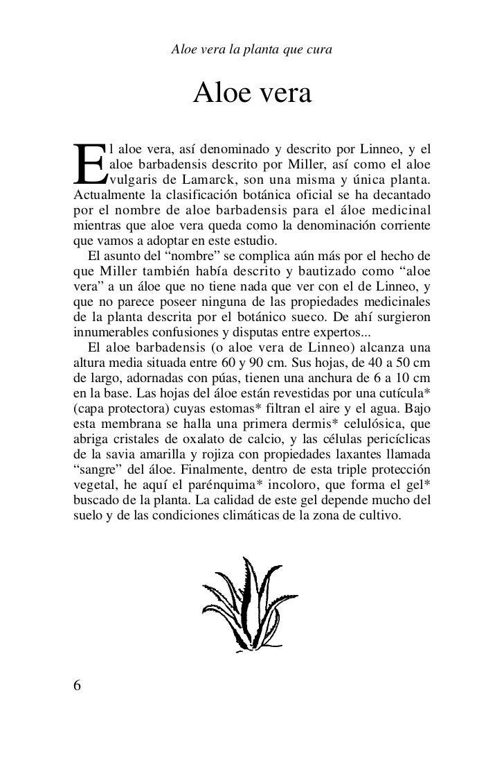 Aloe vera la planta que cura - Como es la planta de aloe vera ...