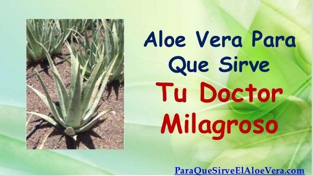 Aloe vera para que sirve tu doctor milagroso - Cuidados del aloe vera ...
